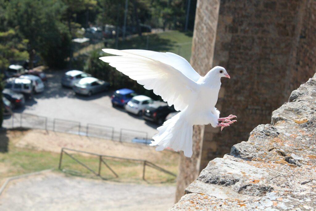 a white bird landing on wall